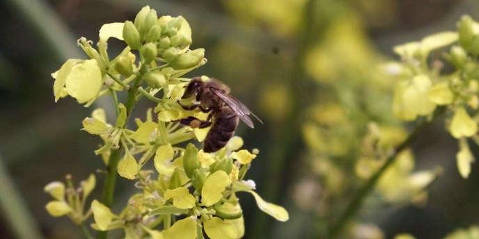 Le printemps n'est pas une bonne nouvelle pour les personnes allergiques.