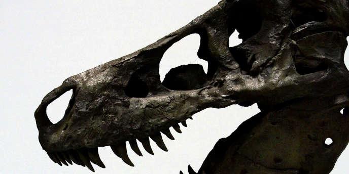 Squelette d'un tyrannosaure rex.