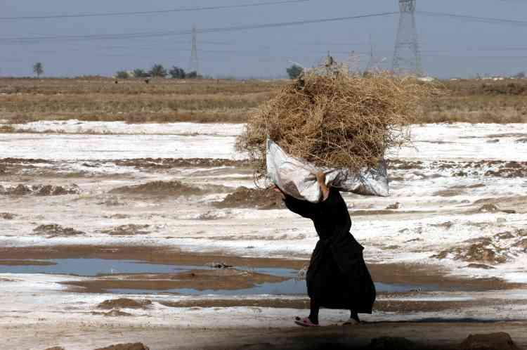 Une Irakienne chiite transporte de l'herbe sèche et du bois de chauffage dans un camp de déplacés à Diwaniah, à 130km au sud de Bagdad.