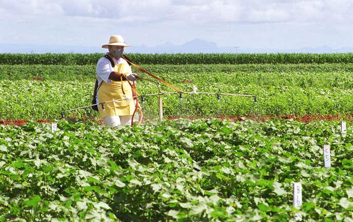 Plantation de soja transgénique dans le centre du Brésil.