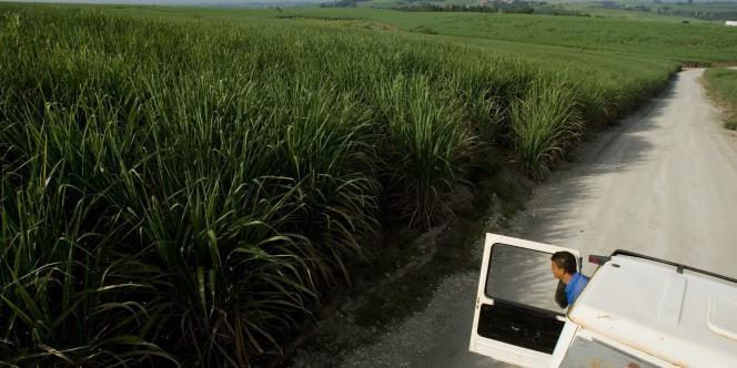 Plantation de canne à sucre au Brésil. L'essentiel de l'énergie produite par Séchilienne-Sidec provient à 89 % de centrales thermiques fonctionnant à la bagasse, à savoir les résidus de canne à sucre. Ce pays d'Amérique du Sud cumule les atouts pour le groupe.