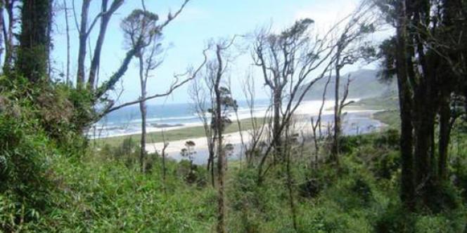 Les forêts tempérées de Valdivian au Chili et en Argentine, où pousse l'Alerce, un arbre très rare qui peut vivre pendant 3.000 ans, sont menacées.