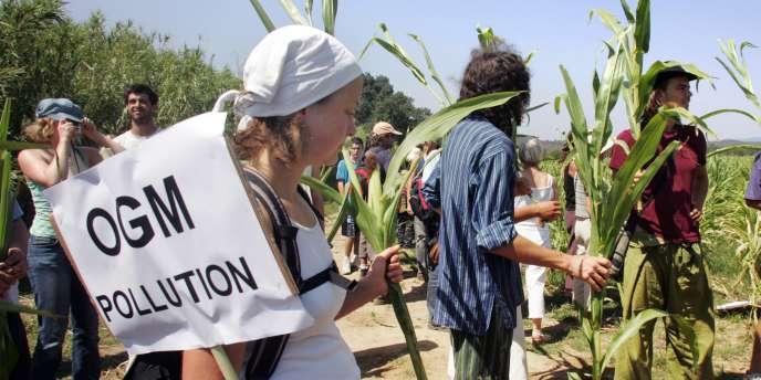 Des militants anti-OGM dans un champ de maïs transgénique. Au total, 200 membres du Collectif des faucheurs volontaires rejoints par ceux de la Confédération paysanne et d'associations locales avaient  participé à la manifestation, en août 2007.