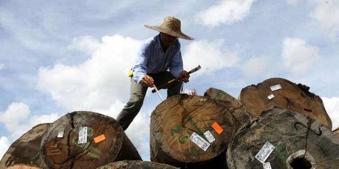 Un travailleur marque des rondins provenant des forêts de l'Etat de Sarawak, la partie malaisienne de Bornéo, en 2007. La déforestation touche particulièrement les pays de l'Asie du Sud-Est.