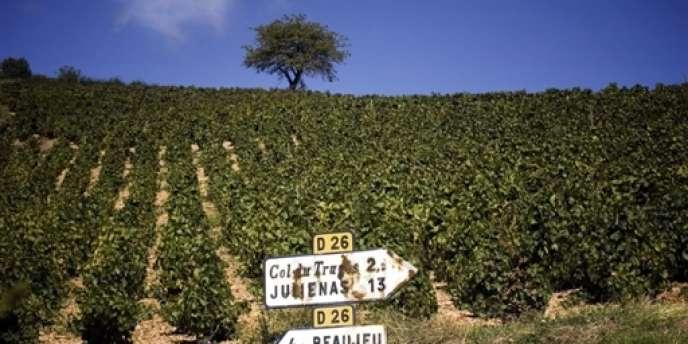 Des vignobles dans la région de Villefranche-sur-Saône en septembre 2006.