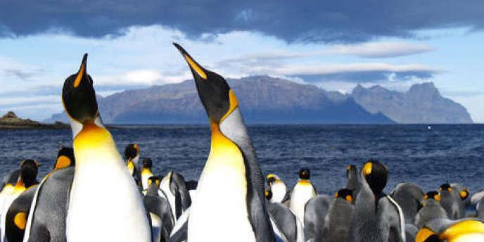 Les moeurs sexuelles des oiseaux qui ont tant scandalisé le scientifique sont à imputer au climat de l'Antarctique.