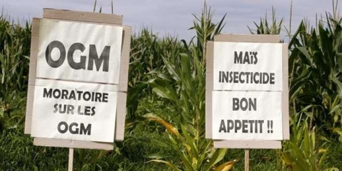 Pancartes anti-OGM dans un champ de maïs à proximité du village de Lugos (Gironde).