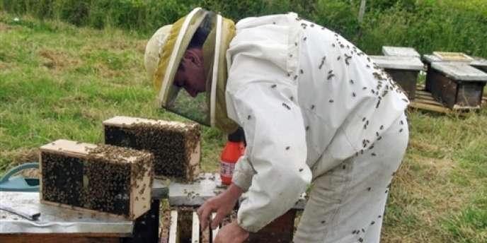 Un apiculteur à Saint-Laurent-de-la-Salle (Vendée), le 25 janvier 2008.