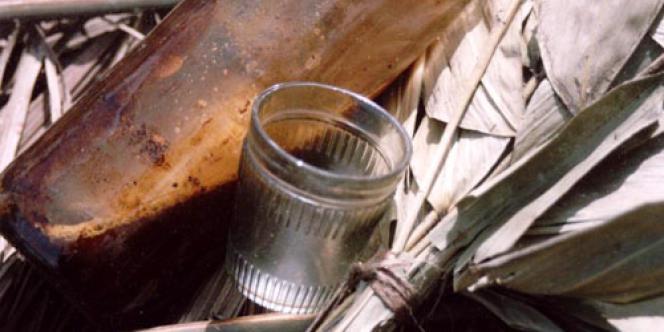 L'ayahuasca est une puissante potion psychédélique utilisée par les chamanes d'Amazonie pour leur rituels. Son usage, considérée comme une drogue en France depuis 2005, explose depuis quelques années chez les touristes occidentaux.