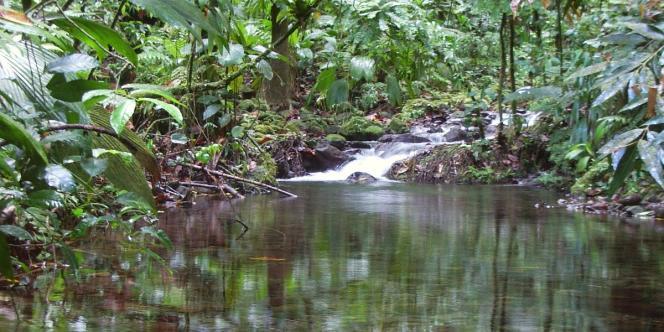 Ruisseau près du Grand Etang, Guadeloupe.