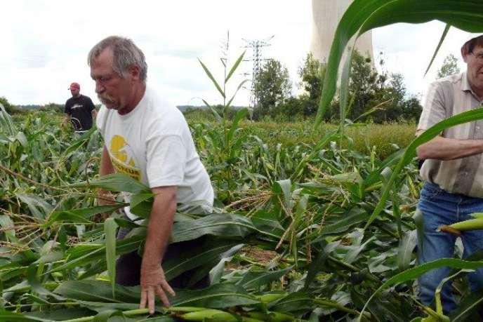 José Bové lors d'une opération de fauchage de maïs OGM à Civaux, en août 2008.
