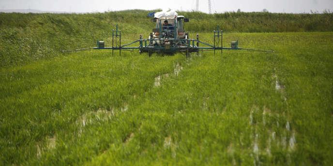 Les terres roumaines sont aujourd'hui une manne pour l'agriculture biologique dont les produits sont de plus en plus prisés en Europe de l'Ouest. S'ajoutent à cela leur prix modique et la possibilité d'exploiter des surfaces inimaginables à l'Ouest (un champ de riz, à quelques centaines de kilomètres de Bucarest, en Roumanie).