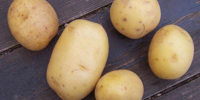 Selon une étude de l'interprofession, 90 % des ménages ont acheté régulièrement des pommes de terre (+3 % par rapport à 2011) pour une consommation annuelle d'environ 15 kilos par personne.