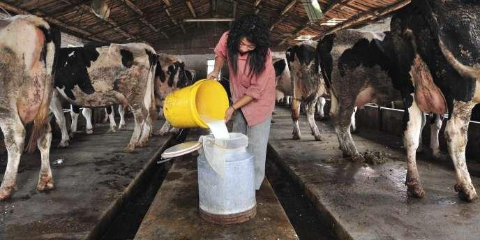 Une fermière remplit un bidon de lait à Shenyang, en Chine, le 20 septembre 2008.