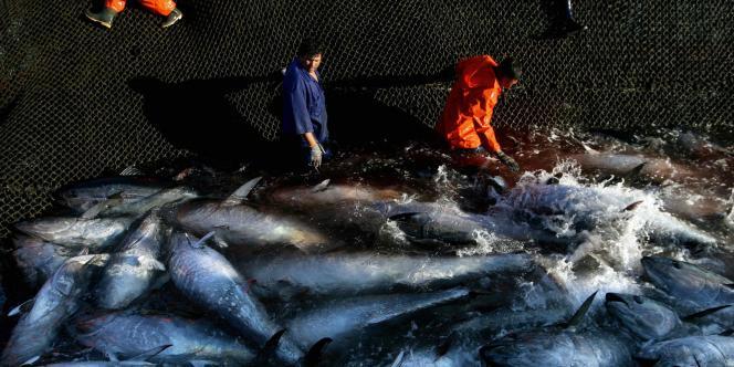 Pêche au thon au sud de l'Espagne.