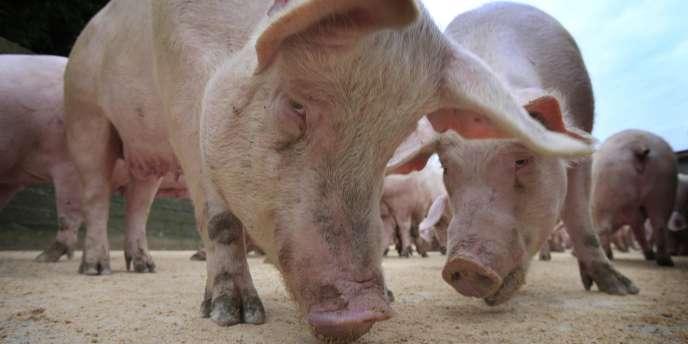 Une viande contaminée à la salmonelle peut être vendue sous contrôle, et à condition qu'elle soit signalée comme telle.
