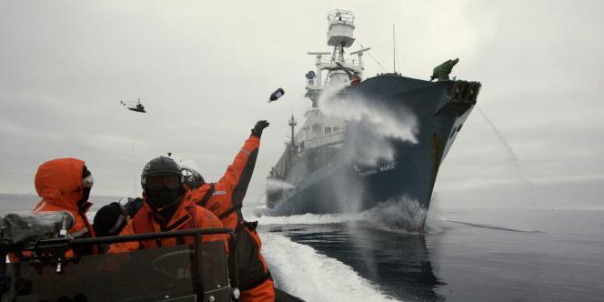 Sea Shepherd est une ONG fondée en 1977 par Paul Watson, écologiste canadien, qui se consacre à la protection des océans.