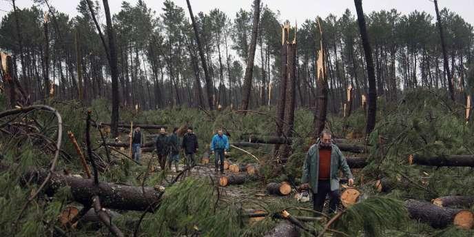 Des employés municipaux de Morcenx (Landes) constatent les dégâts au lendemain du passage de la tempête Klaus, le 25 janvier 2009.