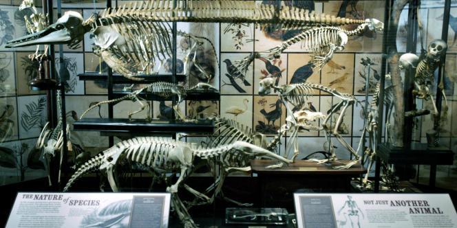 Une exposition sur Charles Darwin au Museum d'histoire naturelle de New York.