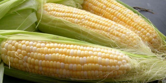 Le sirop de maïs est riche en fructose.