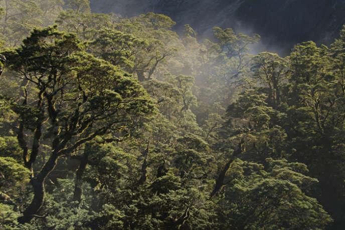 Forêt primaire dans Fjordland park, Nouvelle-Zélande.