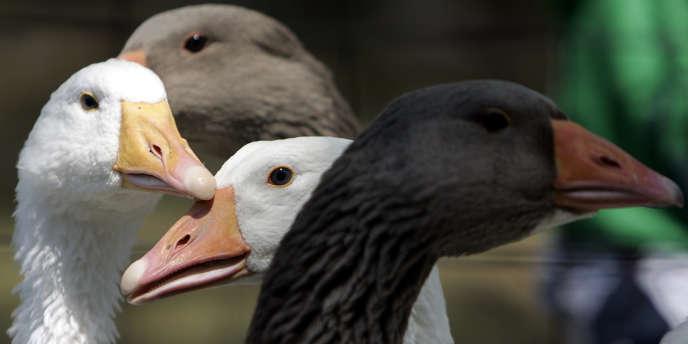 Le groupe de commerce en ligne a interdit la vente de foie gras sur son site britannique, selon ses conditions de vente consultables lundi.