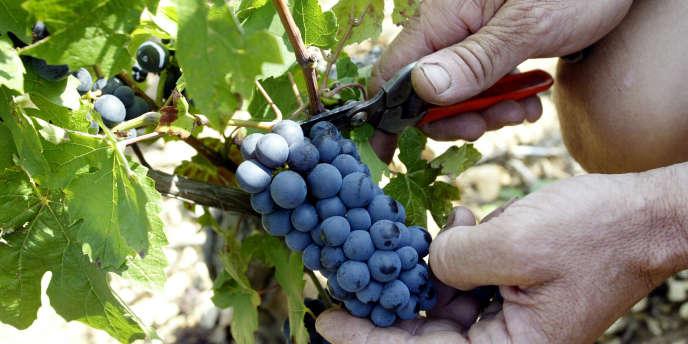 Selon l'interprofession, le chiffre d'affaires de vente des vins bio en France a encore progressé de 15 % en 2012, pour atteindre 413 millions d'euros.