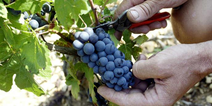 La grande distribution représente environ les deux-tiers des ventes de vin (en volumes)