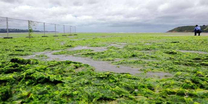 La prolifération d'algues vertes est notamment favorisée par les nitrates d'origine agricole, en progression depuis trente ans sur une partie du littoral breton.