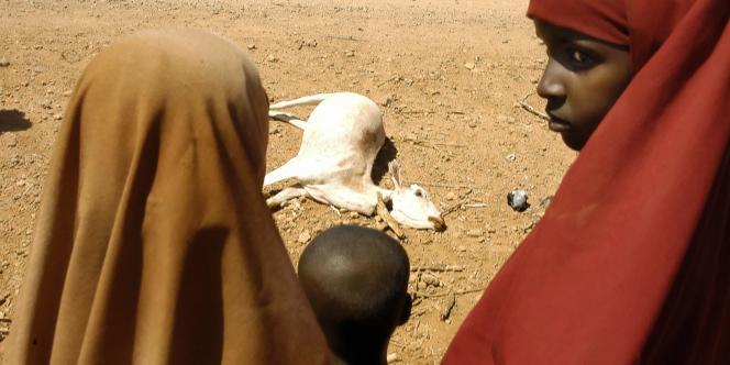La famine dans la Corne de l'Afrique menace des millions de personnes. Sur le terrain, les organisations humanitaires intensifient leurs opérations mais n'endiguent pas la crise.