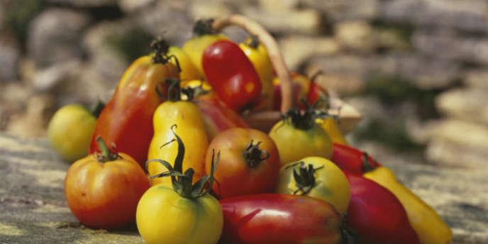 Riches en lycopène, un puissant antioxydant, les tomates réduiraient nettement le risque d'accident vasculaire cérébral, selon une étude finlandaise.