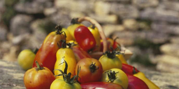 Tomates bio: banana legs, Cornues des Andes, Pêches jaunes.