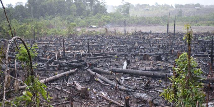 En Amazonie, la déforestation contribue au réchauffement climatique en provoquant près de 20 % des émissions mondiales de dioxyde de carbone.