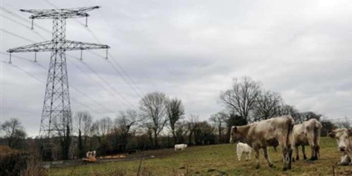Les opposants à la ligne à très haute tension Cotentin-Maine (ici dans la Manche) ont demandé que les câbles soient enterrés. Ce que le sénateur Daniel Raoul estime trop coûteux.