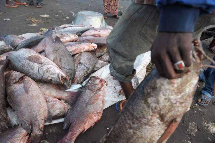 Les Philippines et la Papouasie-Nouvelle-Guinée ont reçu un «carton jaune» de la Commission européenne pour ne pas lutter contre la pêche illégale.