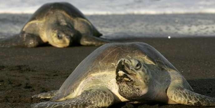 Près de 18 000 espèces ont été découvertes en 2011.