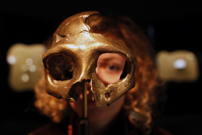 Le crâne d'un Néandertalien au musée de Krapina, dans le nord de la Croatie.