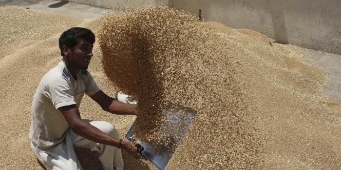 Un ouvrier tamise des grains de blé dans la cour du Comité des ventes de produits agricoles, près d'Ahmedabad.