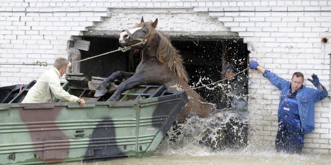 Des agriculteurs aident un cheval à sauter dans un véhicule amphibie à Juliszew, un village du centre du pays.