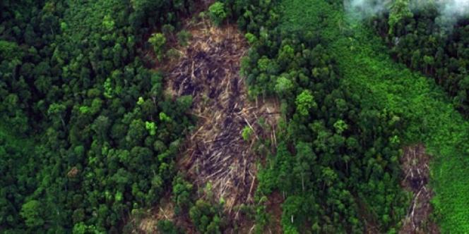 Le parc national de Gunung Leuser dans la région de Sumatra, le 22 mai 2010.