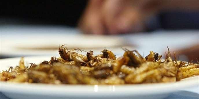 Substituer des larves à la viande ou au poisson est une des pistes envisagées par les Nations unies pour nourrir 9 milliards de personnes à l'horizon 2050.