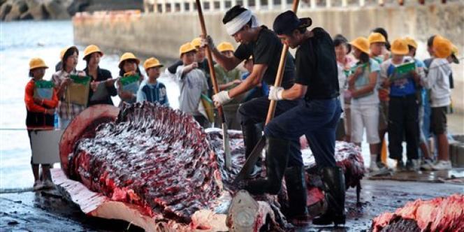 Des employés japonais débitent une carcasse de baleine devant des écoliers, dans le port japonais de Wada, à l'été 2007.