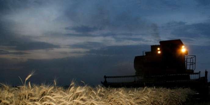 Environ un quart des récoltes russes ont été perdues en raison d'une canicule exceptionnelle et des incendies.