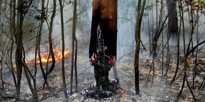 Mercredi, le gouvernement russe a affirmé avoir réduit de moitié la surface des incendies de forêts.