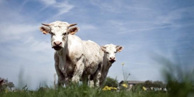 Le Canada a accepté de doubler les quantités de fromages européens importées sans taxes aux frontières, en échange d'un plus grand accès au marché européen pour ses producteurs de viande de boeuf.