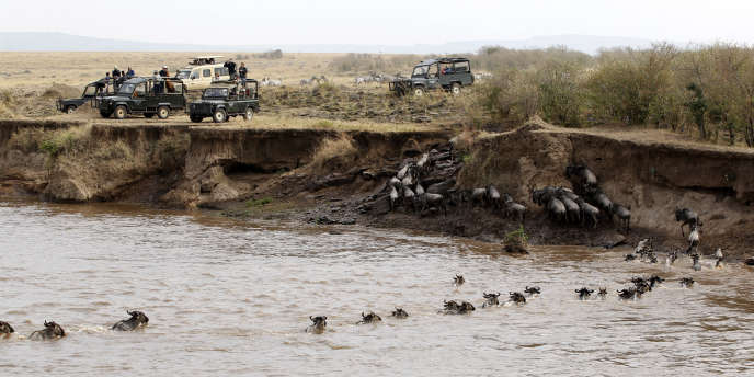 Le projet pourrait décimer la population de gnous et avoir un grave impact sur leurs prédateurs.