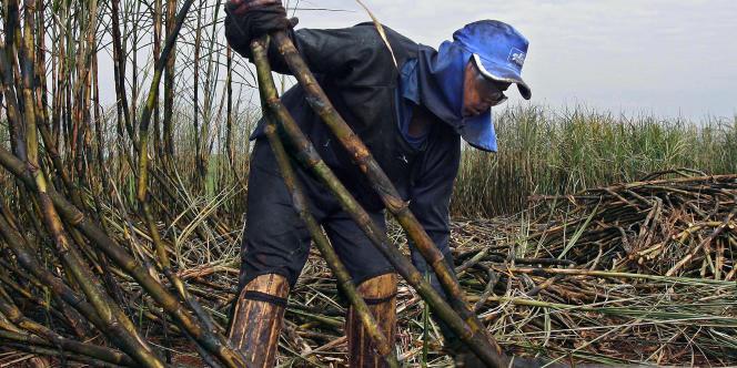 Plantation de canne à sucre servant à produire de l'éthanol, au Brésil. De 2000 à 2012, la production d'éthanol a bondi de 140 % dans ce pays.