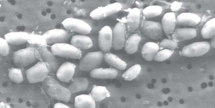 La découverte d'une bactérie capable de se développer à partir de l'arsenic aurait redéfini ce que la science considère comme les éléments de base nécessaires au développement de la vie.