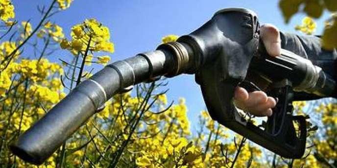 L'Europe veut limiter à 5 % le poids des biocarburants de première génération, fabriqués à base de colza, betteraves, tournesol ou maïs, dans les transports en 2020.
