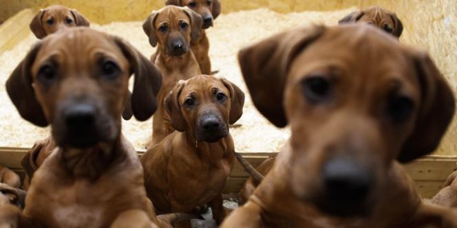 La France compte environ 8 millions de chiens et 10 millions de chats.